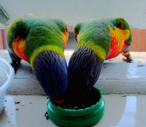 parrotsharing